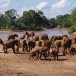 Elephants in Kenya | BARAKA